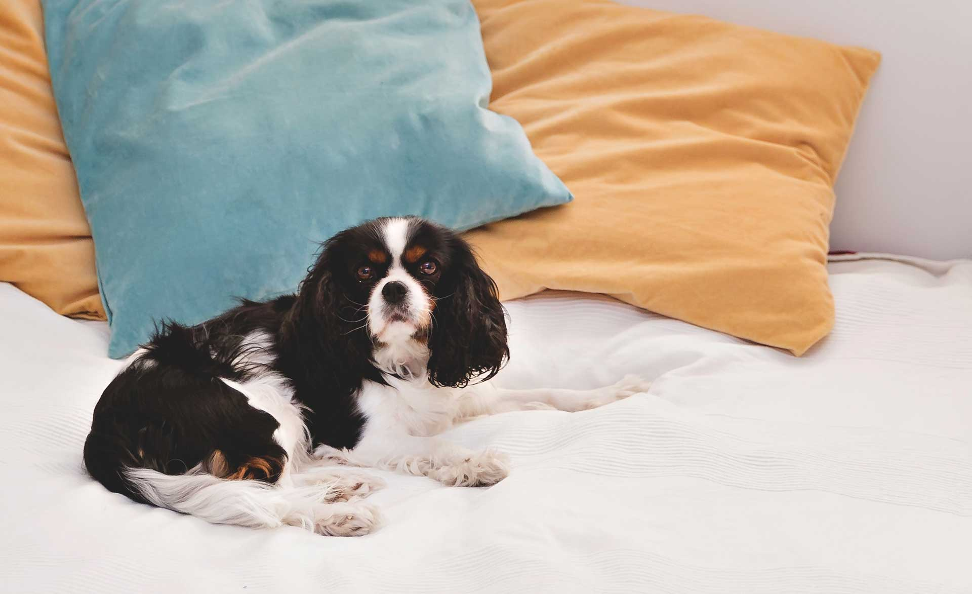 Pet safety tips: Checking in on your furry best friend while you're away. - blog post image
