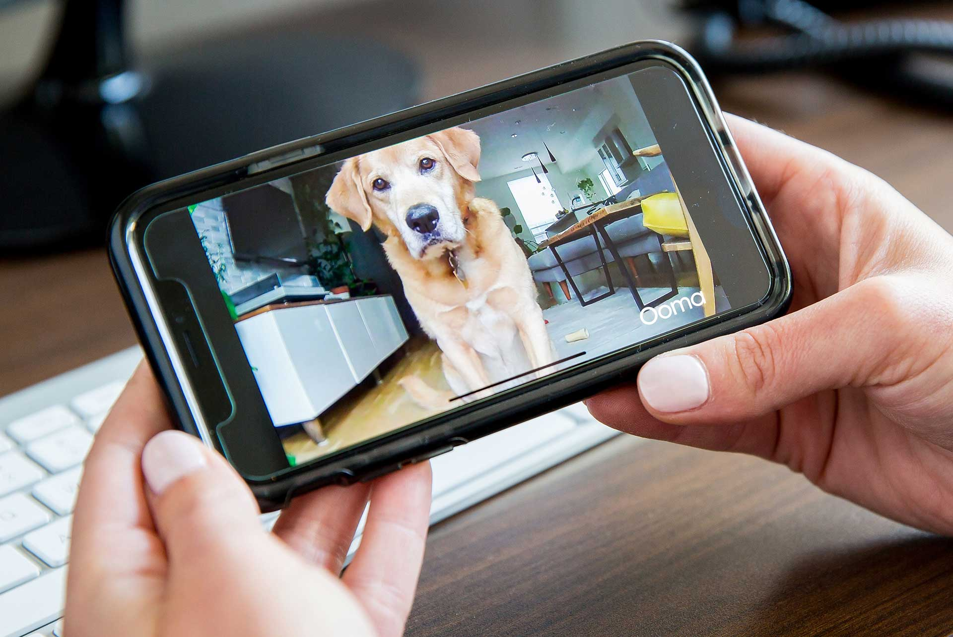 Top 9 things to look for in a pet camera - blog post image